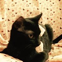 Adopt A Pet :: Bertie - Carlisle, PA