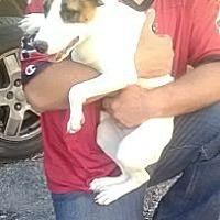 Adopt A Pet :: Caitlynn - Wytheville, VA