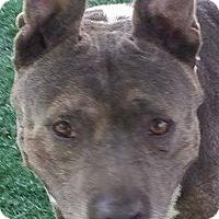 Adopt A Pet :: Mimi - Chula Vista, CA