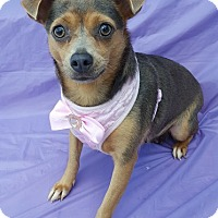 Adopt A Pet :: Hayley - Wellington, FL