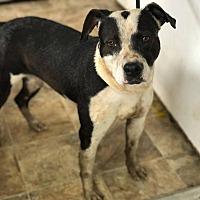 Adopt A Pet :: Basil - Lewisburg, TN