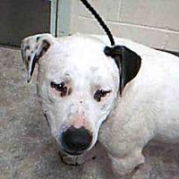 Adopt A Pet :: PAUL - Paradise, CA