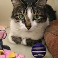 Adopt A Pet :: Sandy - Buena Vista, CO