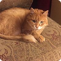 Adopt A Pet :: Webster - Jefferson, NC
