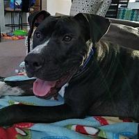 Adopt A Pet :: Hudson-ADOPTION FEE SPONSORED! - Lincoln, CA