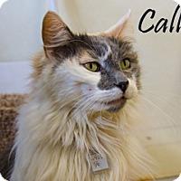 Adopt A Pet :: Calli - Hamilton, MT
