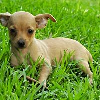 Adopt A Pet :: Mitchell - San Antonio, TX