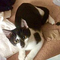Adopt A Pet :: Badger - West Palm Beach, FL