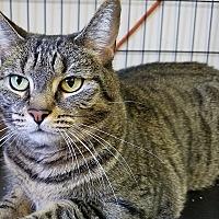 Adopt A Pet :: Cleo - Trevose, PA