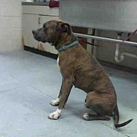 Adopt A Pet :: TYSON - Conroe, TX