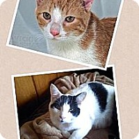Adopt A Pet :: REESE AND TROOPER - currently in a foster home - Roanoke, VA