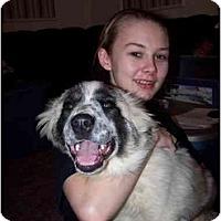 Adopt A Pet :: Panda - Honaker, VA