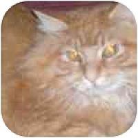 Adopt A Pet :: Robbie - Lombard, IL