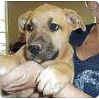 Adopt A Pet :: Perry (pending adoption) - Adamsville, TN