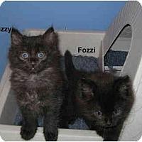 Adopt A Pet :: Fozzi - Jacksonville, FL