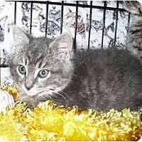 Adopt A Pet :: Dell - Colmar, PA