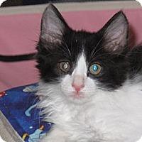 Adopt A Pet :: Honor - Port Republic, MD