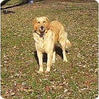 Adopt A Pet :: Buddy - Chandler, IN