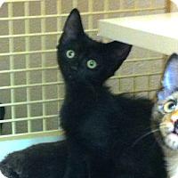 Adopt A Pet :: Firecracker - Gilbert, AZ