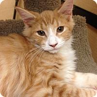 Adopt A Pet :: Kia - Monroe, GA