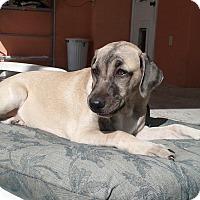 Adopt A Pet :: Aspen - Minneola, FL