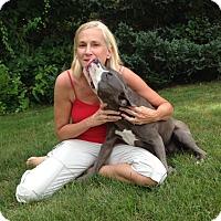 Adopt A Pet :: Duchess - Mount Kisco, NY