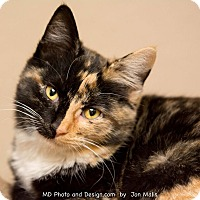 Adopt A Pet :: Ginger - Fountain Hills, AZ