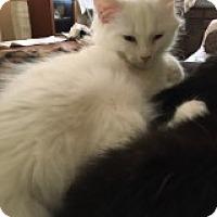 Adopt A Pet :: Blanca - Delmont, PA