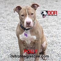 Adopt A Pet :: Polly - St. Clair Shores, MI