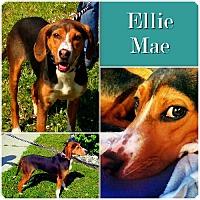 Adopt A Pet :: Ellie Mae PENDING - Ontario, ON
