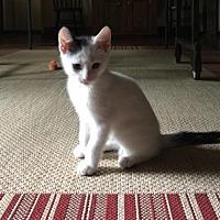 Adopt A Pet :: Moe - Philadelphia, PA