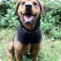 Adopt A Pet :: Duke - Hamilton, ON