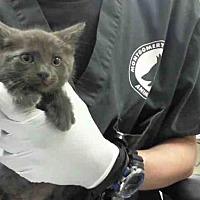 Adopt A Pet :: BURT - Conroe, TX