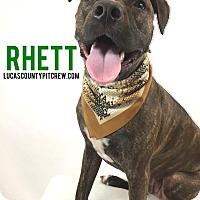 Adopt A Pet :: Rhett - Toledo, OH