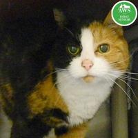 Adopt A Pet :: Maude - West Kennebunk, ME