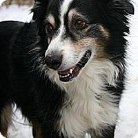 Adopt A Pet :: Bailey - Washington, IL