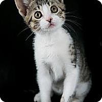 Adopt A Pet :: Knox - Eagan, MN