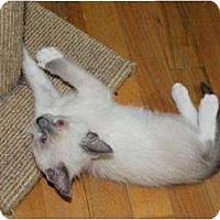 Adopt A Pet :: Gabriel - Oxford, CT