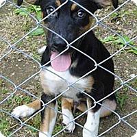 Adopt A Pet :: Axel - Bel Air, MD