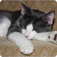 Adopt A Pet :: Izzy - Davis, CA
