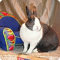 Adopt A Pet :: Elsa - Newport, DE