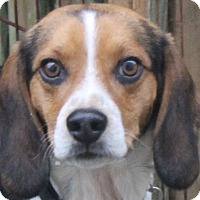 Adopt A Pet :: Austin - North Olmsted, OH