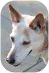 Shepherd (Unknown Type) Mix Dog for adoption in Eatontown, New Jersey - Hazel