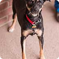 Adopt A Pet :: Douglas - Syracuse, NY
