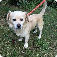 Adopt A Pet :: Chump - Tumwater, WA