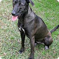 Adopt A Pet :: Luna - Lufkin, TX