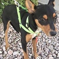 Adopt A Pet :: Rubie - Phoenix, AZ