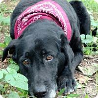 Adopt A Pet :: Dixie - Capon Bridge, WV