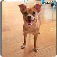 Adopt A Pet :: April May - Tampa, FL