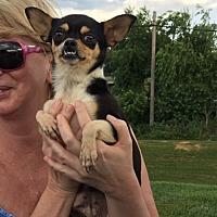 Adopt A Pet :: Aja - Stuart, VA